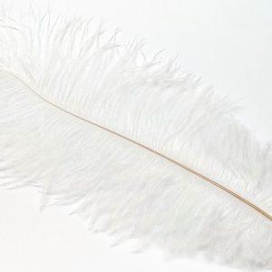 Plume d'autruche 25-30cm